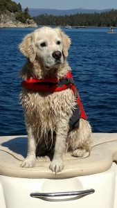 dog in life jacket lake tahoe